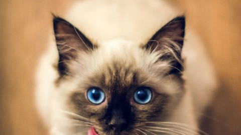 Foto di gatti: 7 felini bellissimi – Velvet Pets