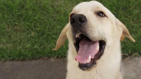 I cani sanno distinguere le persone gentili, parola di scienza – 105.net
