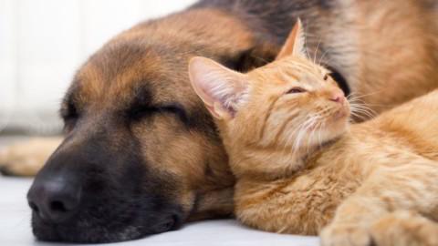 Toelettatura: i migliori Beauty Center per Cani e Gatti ad Avellino – Agendaonline.it