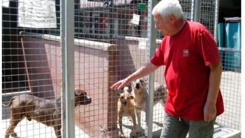 Un database con tutti i cani in cerca di adozione – Mauro Zola (Comunicati Stampa) (Registrazione)