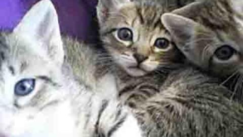 Gattini in casa: istruzioni per l'uso – ChiamamiCittà