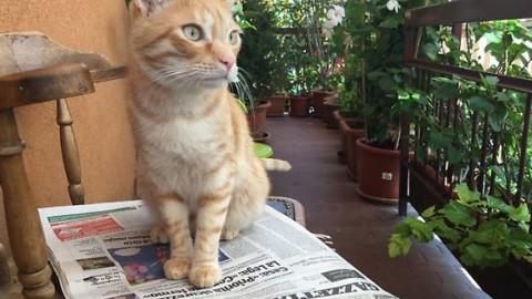 Il gatto più bello della città: mandaci le tue foto – Gazzetta di Parma