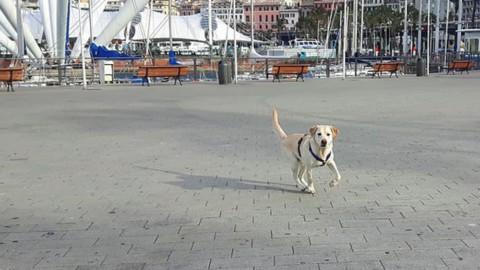 Dogs & the City, al Porto Antico una giornata per scoprire la città con … – GenovaToday