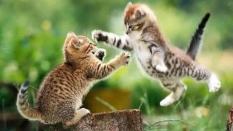 I comportamenti del gatto, incontro con Valentina Fabris – mentelocale.it