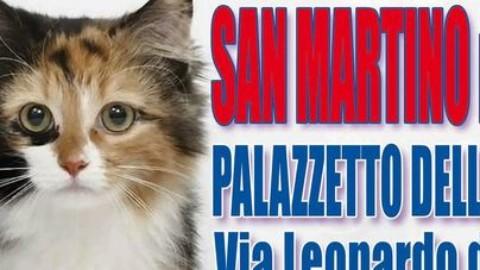 Esposizione internazionale di gatti: in palio il titolo di micio più bello … – Il Gazzettino