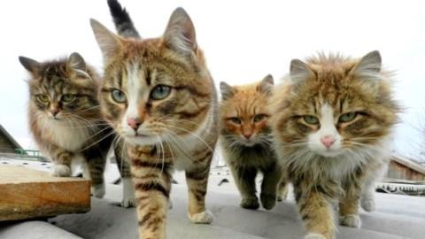 Parigi, teneva 130 gatti in un appartamento di 25mq: ricoverata in … – Il Messaggero