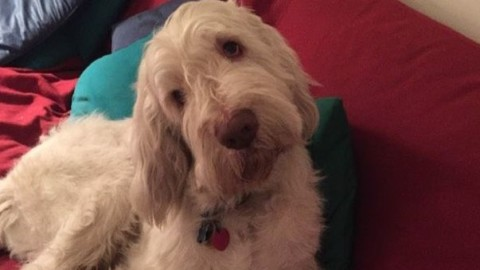 I cani ci amano: parola di scienziato – Il Messaggero