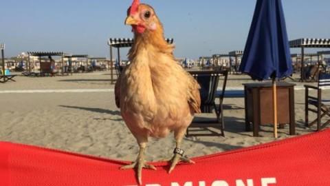 Una gallina per amica, aumentano le famiglie che la scelgono come … – Il Secolo XIX