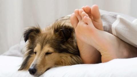 Dormire con il cane migliora il riposo notturno – Impronta Unika