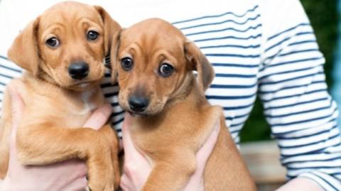 Beneficenza agli animali: il nuovo marketing dei pets – Libero Pensiero