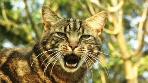 Come calmare un gatto che miagola in continuazione – Mondo Gatti