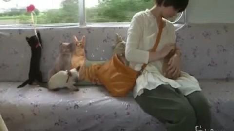 Il treno dei gatti in Giappone contro il randagismo – Mondo Gatti