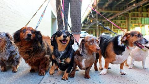Portare a spasso il cane a norma di legge: le regole da rispettare – Money.it