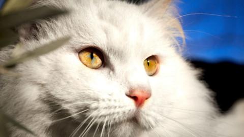 I gatti più belli del mondo (ei rettili) in mostra a Seveso – Monza Today