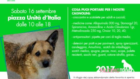 Solidarietà in piazza Unità d'Italia, raccolta viveri e farmaci per i cani … – PalermoToday