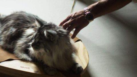Animali: quando la cuccia diventa arredamento – Quotidianocasa