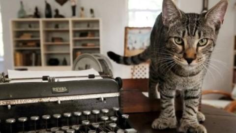 Florida, risparmiata la casa di Hemingway: gatti in salvo grazie alla … – La Repubblica
