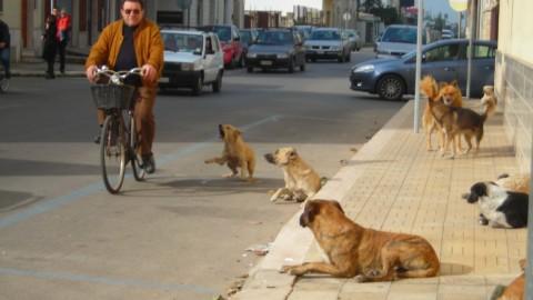 "San Marco in Lamis, proteste e paure: ""Troppi cani randagi"" – San Marco in Lamis"