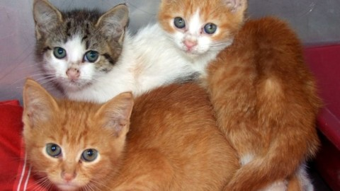 Al via una campagna di sterilizzazione dei gatti a tariffe convenzionate – TrevisoToday