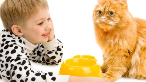 Rapporto gatti e bambini: consigli per una convivenza sicura – Vita Da Mamma