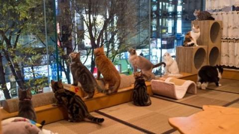 Apre a Cagliari il primo Cat Café sardo: il locale dedicato agli amanti … – YouTG.net