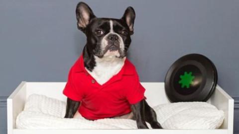 Ikea lancia Lurvig, la linea di arredamento per cani e gatti – Wired.it
