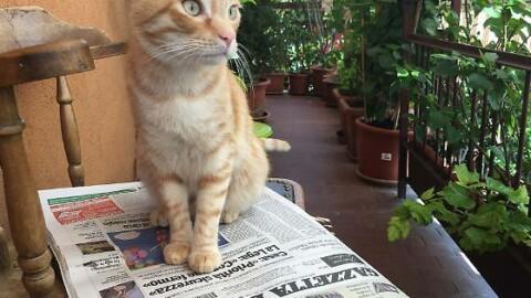 Il gatto più bello di Parma: sospesa la votazione finale – Gazzetta di Parma
