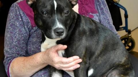 Donna disabile costretta ad una scelta tremenda: il cane oppure la … – Velvet Pets