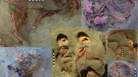 C'è un cimitero egiziano dei gatti unico al mondo, a Berenice – LifeGate