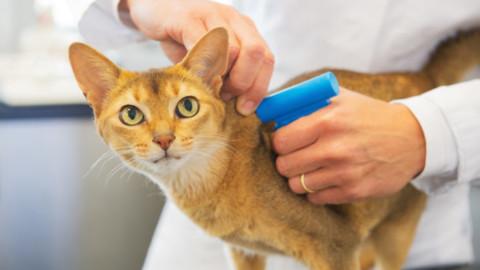 Comune di Parma: microchip gratis per gatti l'11 novembre – ParmaPress24 (Satira) (Comunicati Stampa) (Blog)
