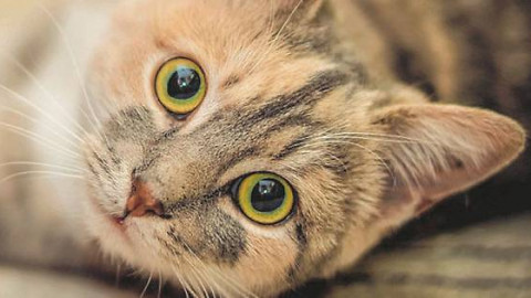 Anche i gatti possono soffrire per lo stress – Gazzetta di Parma