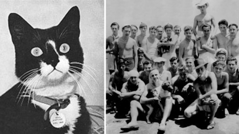 Simon: l'Eroico Gatto che salvò i Marinai inglesi della Fregata … – Vanilla Magazine
