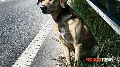 L'orrore: quattro cuccioli di cane e la madre lanciati giù dal balcone … – PerugiaToday
