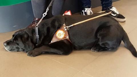 Giornata Nazionale del cane guida, il decalogo per tutelare quattro … – GenovaToday
