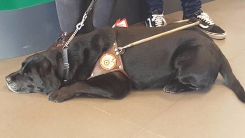 Giornata nazionale del cane guida, cerimonia in Regione: decalogo … – Il Vostro Giornale