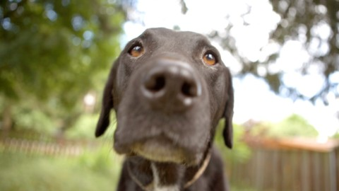 I cani diventano più espressivi quando li guardiamo – LifeGate