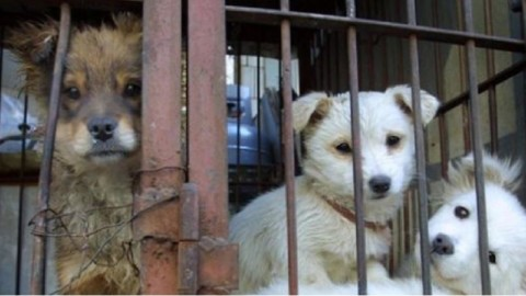 Condannata per maltrattamenti di sei cuccioli di cane, erano … – il Dolomiti
