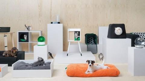 IKEA ha lanciato una linea di mobili per animali domestici – FoxLife