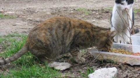 Muore lasciando i suoi 44 gatti, la Protezione Animali lancia un … – SavonaNews.it