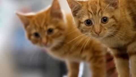 Gatto smarrito: come comportarsi – FoxLife