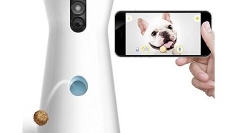 Furbo è la prima videocamera per cani per vedere, parlare e … – Macity (Blog)