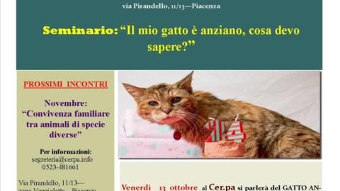 Gli acciacchi del gatto anziano, al Cerpa si parla di prevenzione e … – IlPiacenza