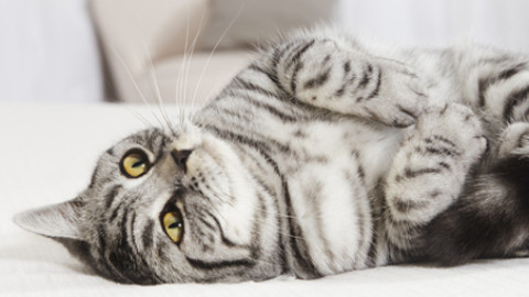 I gatti riconoscono la voce dell'umano, ma la ignorano! – Petpassion.tv