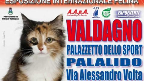 """""""I Gatti Più Belli del Mondo"""": esposizione internazionale felina a … – VicenzaToday"""