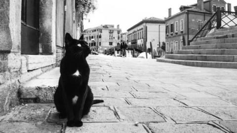 Felinamente felici. I gatti famosi di Venezia in cinquanta scatti – la Nuova di Venezia