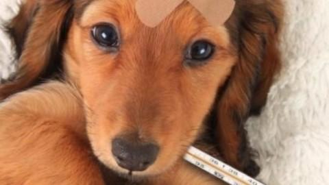 Gli animali domestici conquistano più considerazione nella … – Blasting News