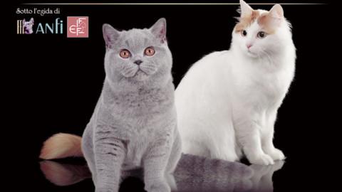 Sesta edizione dell'Esposizione Internazionale Felina di Bari – BariToday
