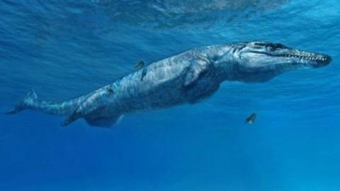 Il 'mostro di Melksham' è il coccodrillo più 'vecchio' di sempre e … – Scienze Fanpage
