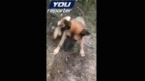 Filma il cane che sta morendo: è polemica a Sapri sul rifugio «lager» – Giornale del Cilento