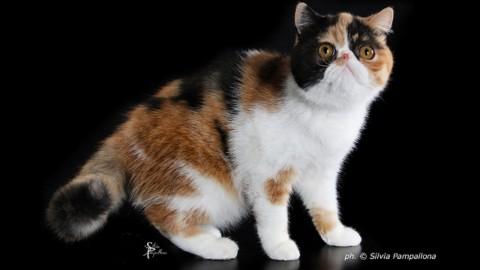 Un gatto per amico, la foto del tuo micio può diventare la copertina … – gonews